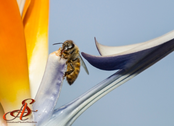 Bee found her way back to the top of the flower