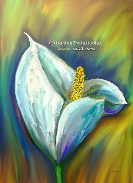 White giant Calla Lilly painting